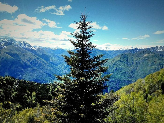 Tree Pine Tree Forest Mountain Nature Blue Beauty In Nature Snowcapped Mountain Mountain Range Snow Scenics