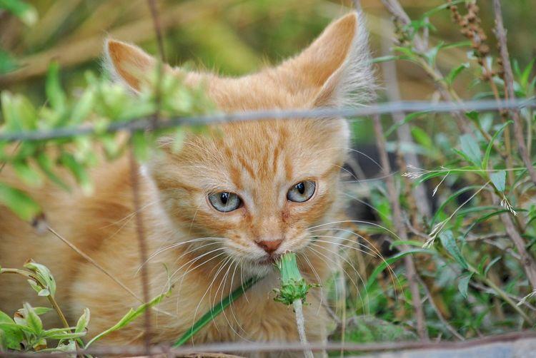 Close-up portrait of cat by plants
