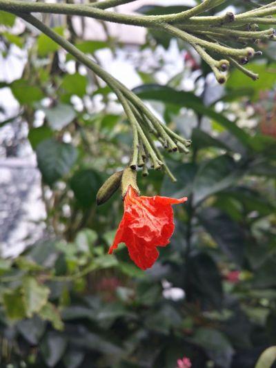 some sort of red flower Male Flowers Flowerporn Flowerpower