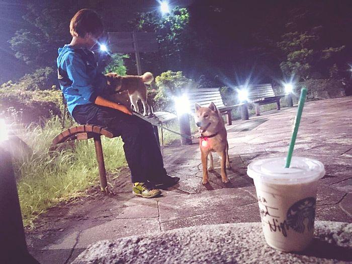 珍しく夜のお散歩。駆と奈々を連れて・・・。いつもはお酒を飲んでしまうと寝てしまうので、昨晩は夕食後富士川SAをお散歩しました。少しヒンヤリする夜でしたが、冷たい飲み物が良い季節になりましたね。 Starbucks Coffee おさんぽ Walking Fuji City 富士川SA Shiba Inu Night Lights
