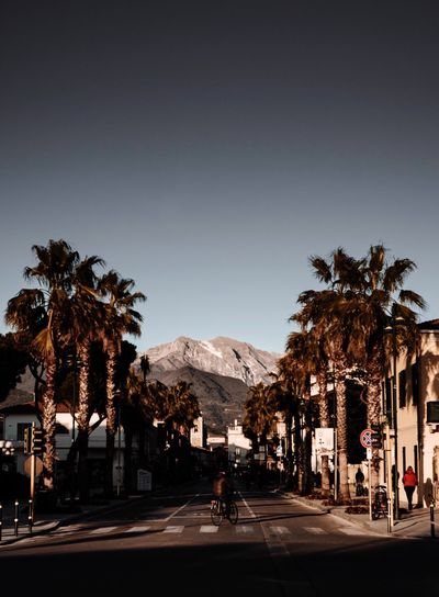 Forte dei Marmi Fortedeimarmi Beach Palms Palm Tree Plant Sky Group Of People City Architecture Nature Tropical Climate Palm Tree Outdoors Day Street Incidental People Mountain Lifestyles