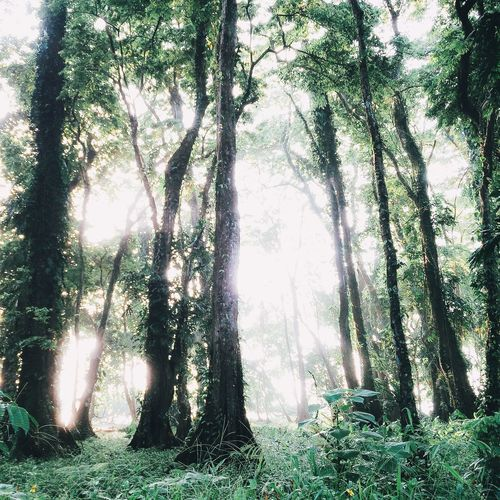 Landscape Nature Nature_collection EyeEm Nature Lover Trees Vscocam VSCO Light Landscape_Collection