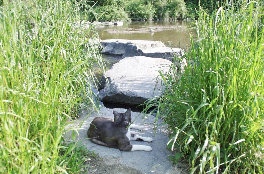Cat Grass River Riverside Green Park Peace Traveling Oita Japan 大分 Animals
