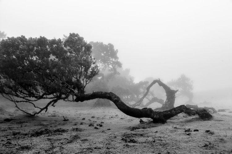 Tree on land against sky