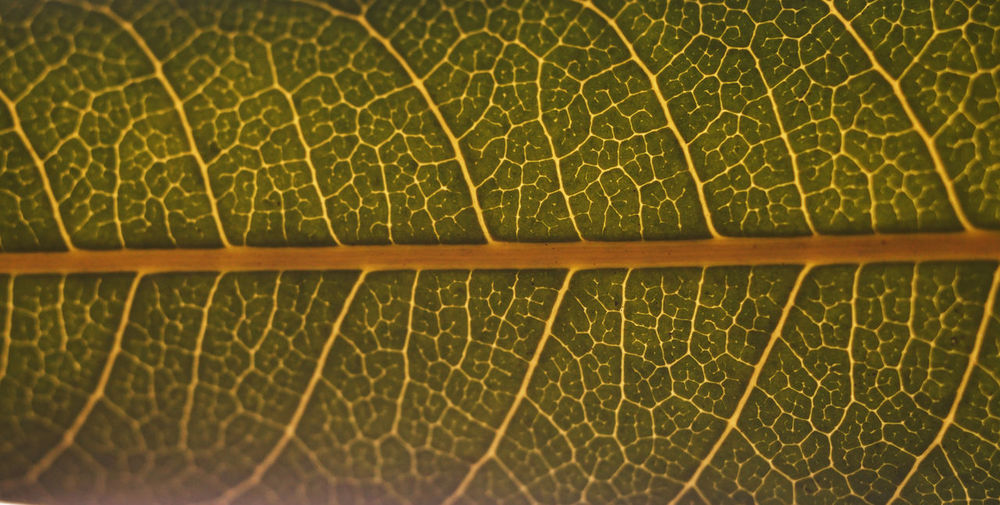 Full frame shot of green leaf