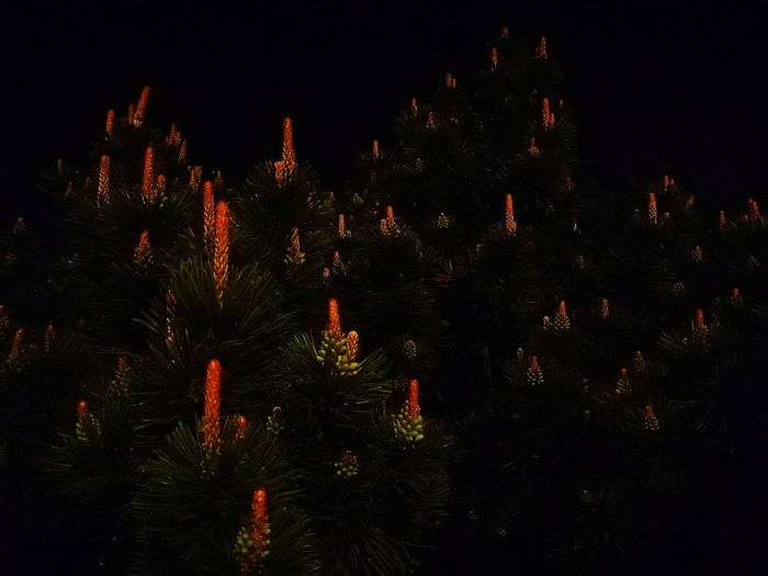 Close-up of illuminated trees on field against sky at night
