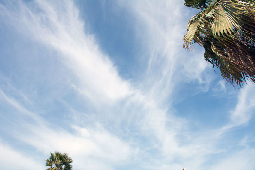Captured by Beautiful Trees And Flowers Are In The Garden Beauty In Nature Blue Cloud - Sky Day Low Angle View Nature No People Outdoors Palm Tree Sky Tree