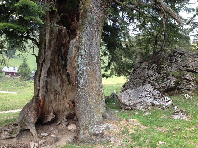 Big Hole In Tree Door In Jungle Door In Tree Door To Heaven Nature Strange Tree Tree Wood