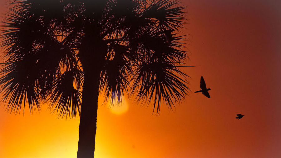 Beauty In Nature Bird Flying Idyllic Low Angle View Majestic Nature No People Orange Color Outdoors Outline Palm Tree Scenics Silhouette Sky Sun Sunrise Tranquil Scene Tranquility Tree Tree Trunk Home Is Where The Art Is Colour Of Life Two Is Better Than One The Great Outdoors - 2017 EyeEm Awards Neon Life