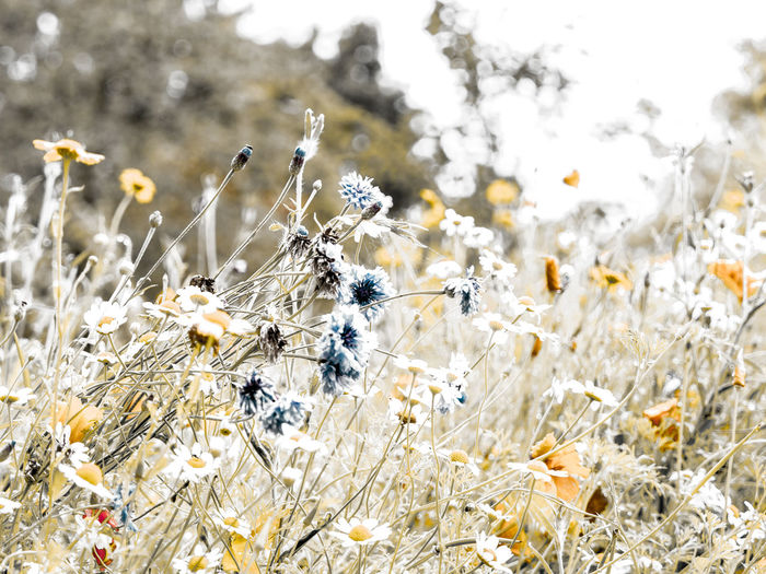 wild flowers Beauty In Nature Close-up Day Field Flower Flower Head Flowering Plant Focus On Foreground Fragility Freshness Growth Land Nature No People Outdoors Plant Plant Stem Selective Focus Springtime Tranquility Vulnerability