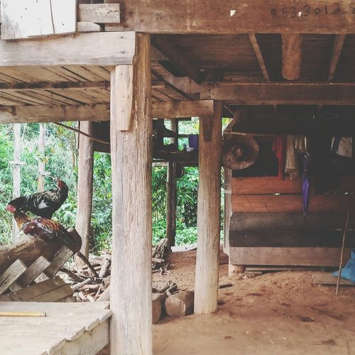 Architecture Architectural Column Built Structure Day Indoors  No People Water Chickens Poor  Poorpeople China Thailand Rural Scene Village Life Agriculture Palafitte