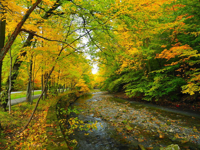 beautiful fall colors in Cleveland, OH Fall Fall Beauty Fall Colors Fall Background Cleveland Cleveland, Oh Squire's Castle Euclid Creek Metropark