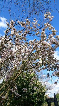 Blossom Spring Flowers Springtime Relaxing
