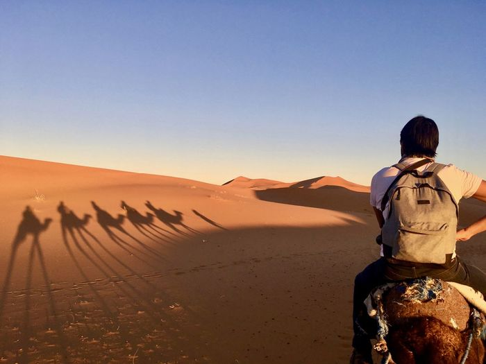 Rear view of man riding on camel at desert against clear sky
