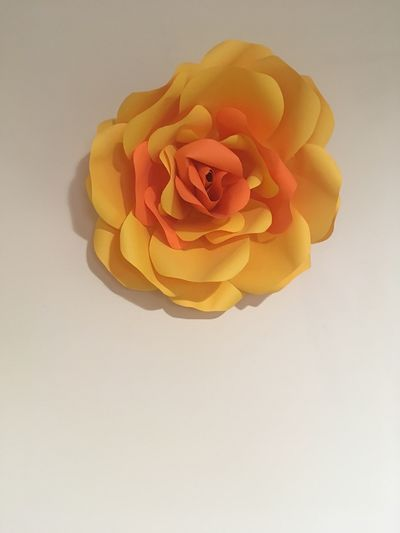 Facing flower IMography Flower Yellow Flowering Plant Plant Petal Freshness Beauty In Nature
