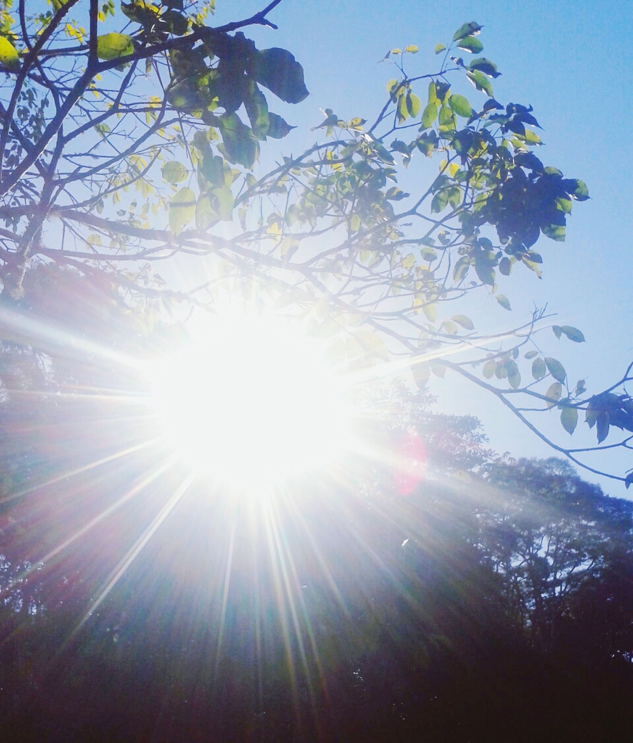 sun, sunbeam, lens flare, sunlight, tree, low angle view, bright, branch, growth, clear sky, nature, sunny, beauty in nature, sky, back lit, tranquility, day, outdoors, no people, brightly lit