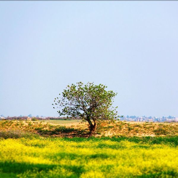 Captured at 50/60mph! Lonesome tree in Tunisia