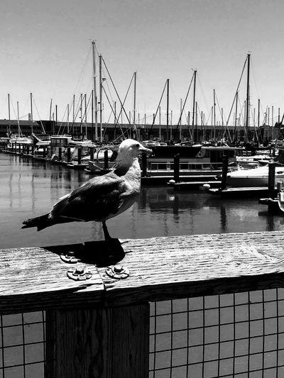 Where we go & what you see 😀 Bird Water Vertebrate Animal Themes Animal Animals In The Wild Animal Wildlife