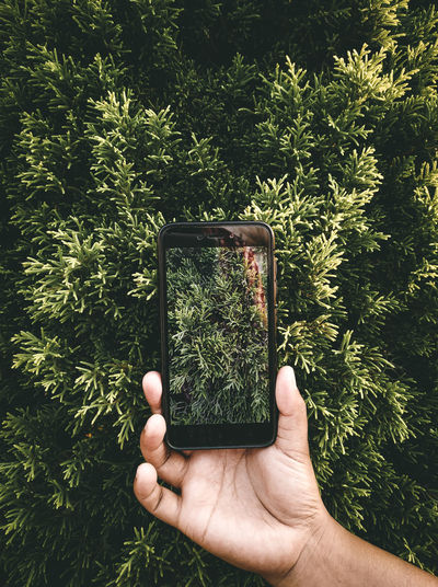 Hand holding mobile phone and plants