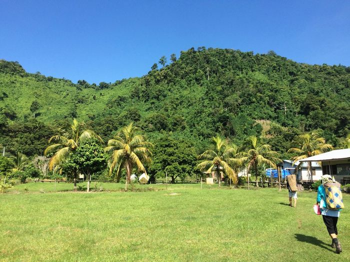 Chasing the green Village Mountain Hills Borneo Native People Tree Green Color Grass Clear Sky Growth Green Palm Tree Outdoors Nature Day Men Field Real People Beauty In Nature Landscape Blue Sky People EyeEmNewHere EyeEmNewHere