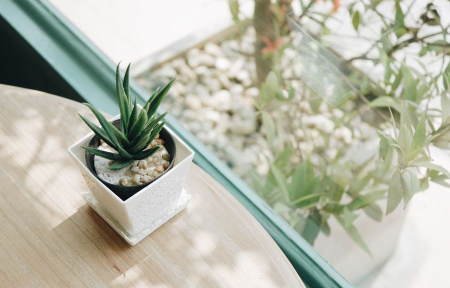 Plant Green Color Indoors  Houseplant Nature Leaf Growth Table Day Home Showcase Interior Desk Organizer