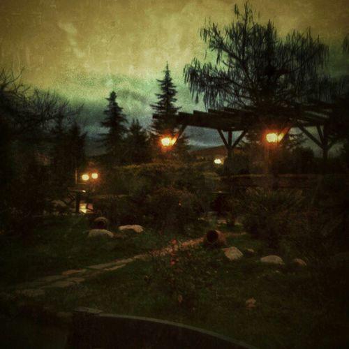 Orhangazi . Cafe Bah çe. Instagramt ürkiye. instaturkey. instasky. instagood. instamood. photooftheday. gununkaresi. gununfotografi. goth. lamba. lights view trees.