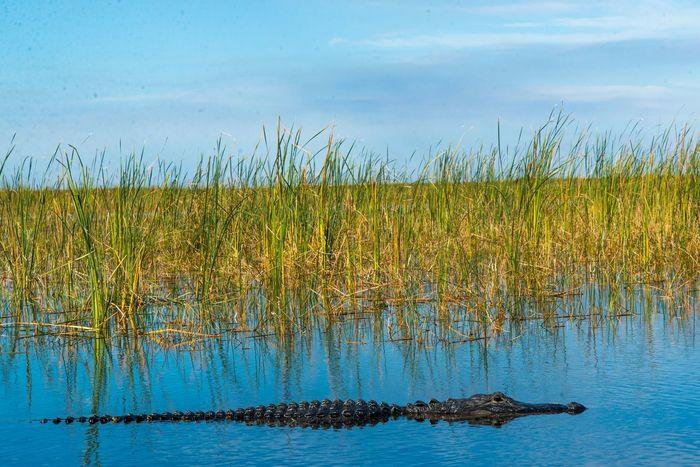 Florida Gators 2 Dec 2014 Florida Gators