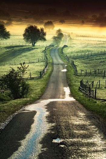 Tree Road Landscape Tranquil Scene Grass Transportation Empty Long Curved  Scenics The Way Forward Solitude Curve Non-urban Scene Outdoors Countryside Narrow Nature First Eyeem Photo