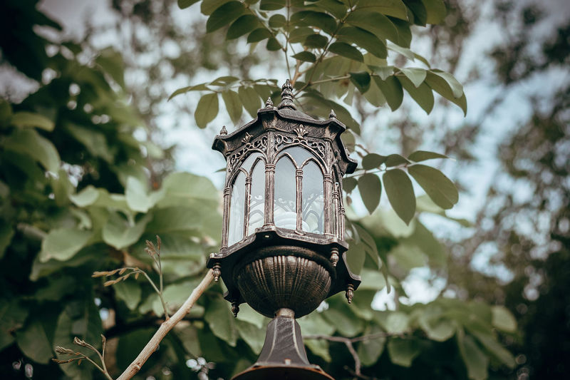 Low angle view of electric lamp hanging on tree