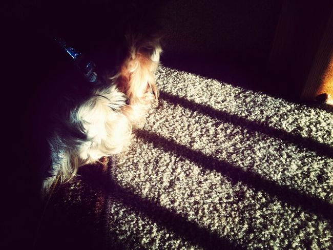Playing With Sunlight
