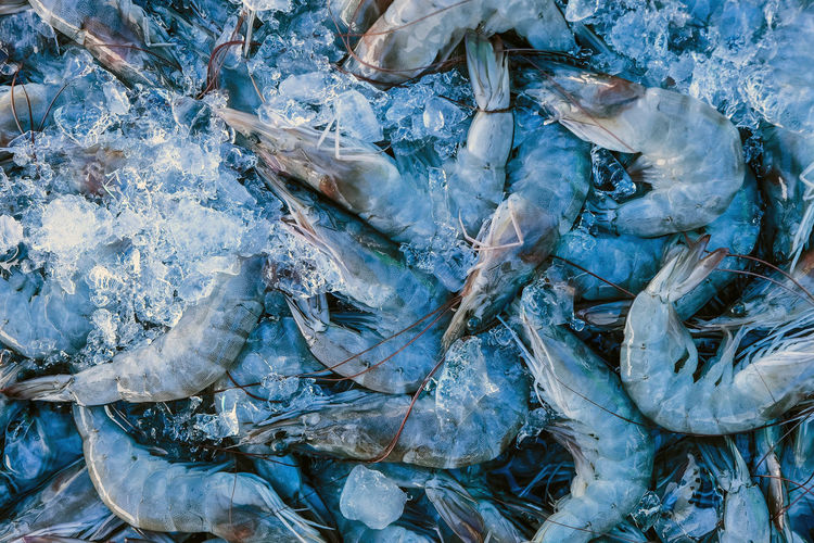 High angle view of frozen fish in sea