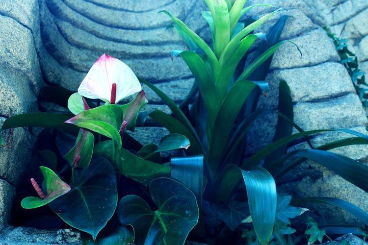 April, 2018 - ORLANDO FL, Green Flower Travel Brazilian Scrapbook 2018 Orlando Florida Lovethisplace Gaylord Palms Resort Greenflowers