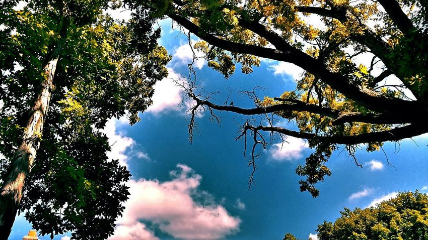 Beauty In Nature Peoria, Il River Road Blue Sky Trees And Sky Clouds And Sky Summertime Life Is A Journey