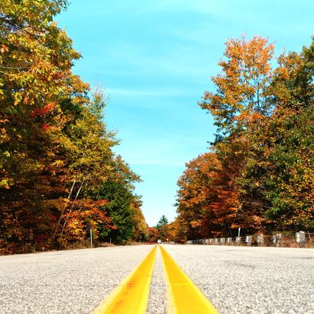 Eye4photography  Streetphotography Leaf 🍂 Indian Summer Colors Of Autumn Learn & Shoot: Leading Lines Street Photography Road Road Trip Yellowline Yellow Line From My Point Of View From Below On The Ground Asphalt Yellow Leaves