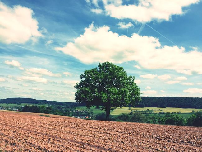 Tree Lonely Tree One Tree Tree And Sky Trees And Nature Treescollection Baum 🌳🌲 Baum Ein Baum Nature_collection Natur Iphonegraphy Hobbyphotography Hobbyfotograf Tree And Field Arbre Beautiful Nature Beauty In Nature