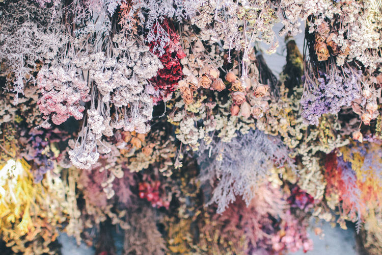 Colorful flowers is hanging on the ceiling,Bottom view of Colorful blooming flower archery,Beauty of colorful flower and light decoration on ceiling No People Close-up Nature Full Frame Beauty In Nature Textured  Day Plant Backgrounds Rock Growth Outdoors Vulnerability  Lichen Fragility Flowering Plant Flower Rock - Object Multi Colored Tree Beautiful Background Wedding Arrangement Decoration Design Colorful Decor Blossom Vintage Romantic Green Rosé Floral Flora Natural Hanging Celebration Marriage  Bridal Interior Ceremony Ceiling Bouquet Blooming Fantasy Hallway Harmony Elegant Event