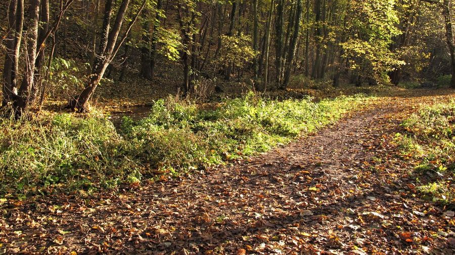 Autumn Sunlight Change Day Direction Forest Growth Leaf Leaves Nature No People Non-urban Scene Outdoors Shadow The Way Forward Trail Tranquil Scene Tranquility WoodLand
