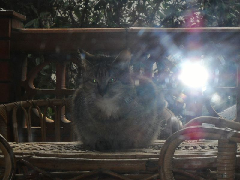 Showing Imperfection Cat she's Diana, the huntress Cat Lovers On The Table Tiger Cat Glitch Animal Photography Backlight Glitter