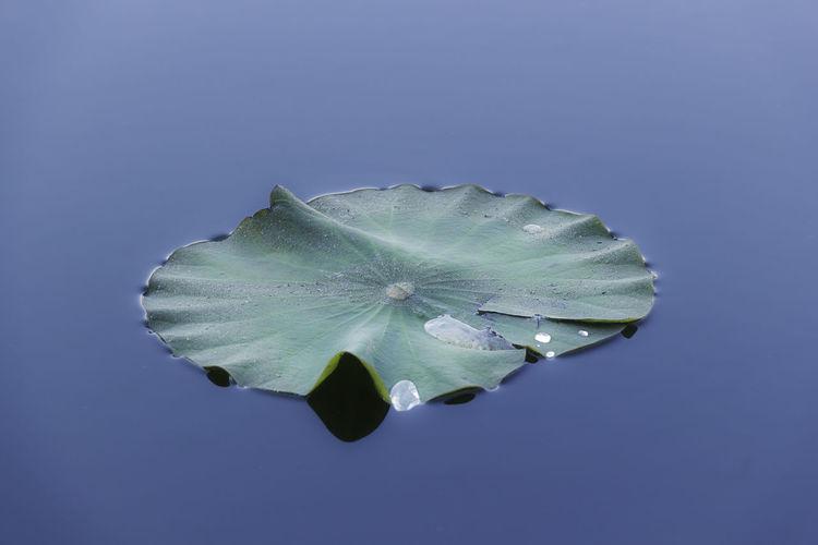 Calm Leaf Ueno