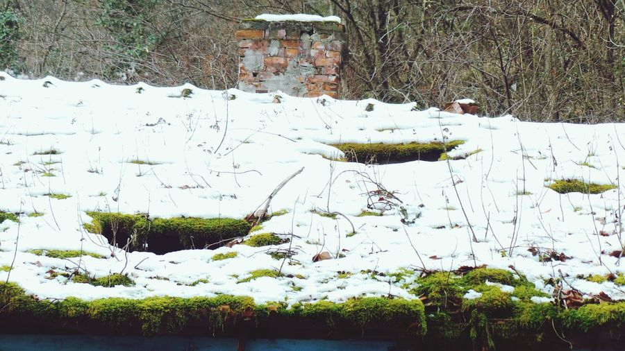 Winter Snow Cold Temperature Nature Weather Frozen No People Background For Quotes Background Photography Screensaver Shot Backgrounds Growth Roof Moss Roof Tiles Roof Damage Covered In Snow Covered In Moss Decaying Building Decaying Structure Decaying. Decaying Wood. Things Of Old. Abandoned House Abandoned Buildings Abandoned Places Abandoned