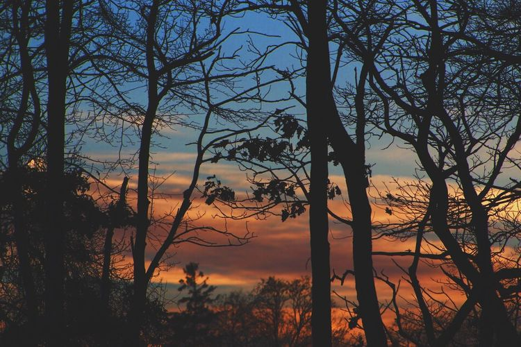 Tree Sunset Nature Sky Beauty In Nature Scenics Tranquility Landscape Outdoors No People Tranquil Scene Forest Day Canon Photography Beauty In Nature Winter New York Canonphotography