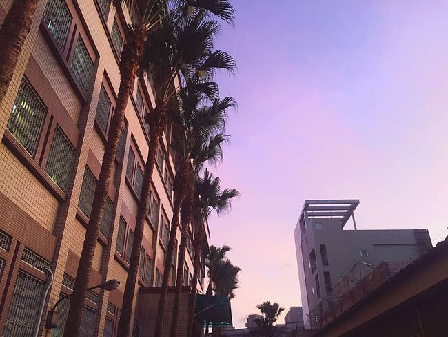 The jail in Taiwan Black And Pink Millennial Pink Built Structure Building Exterior Architecture Tree Low Angle View Palm Tree No People City Outdoors Growth Sky Day Nature Millennial Pink EyeEmNewHere EyeEmNewHere