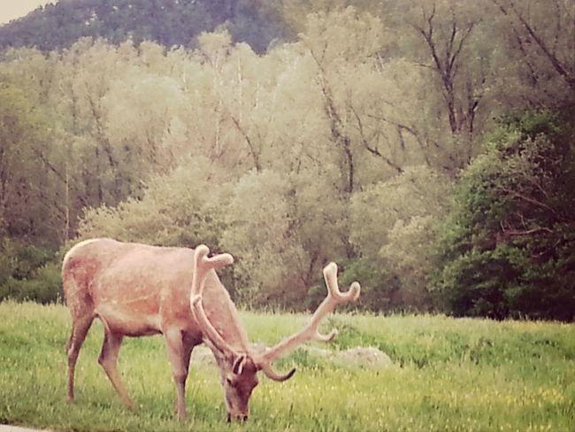 Hanging Out EyeEm Animal Lover Eyeem Natur Lover Enjoying Life