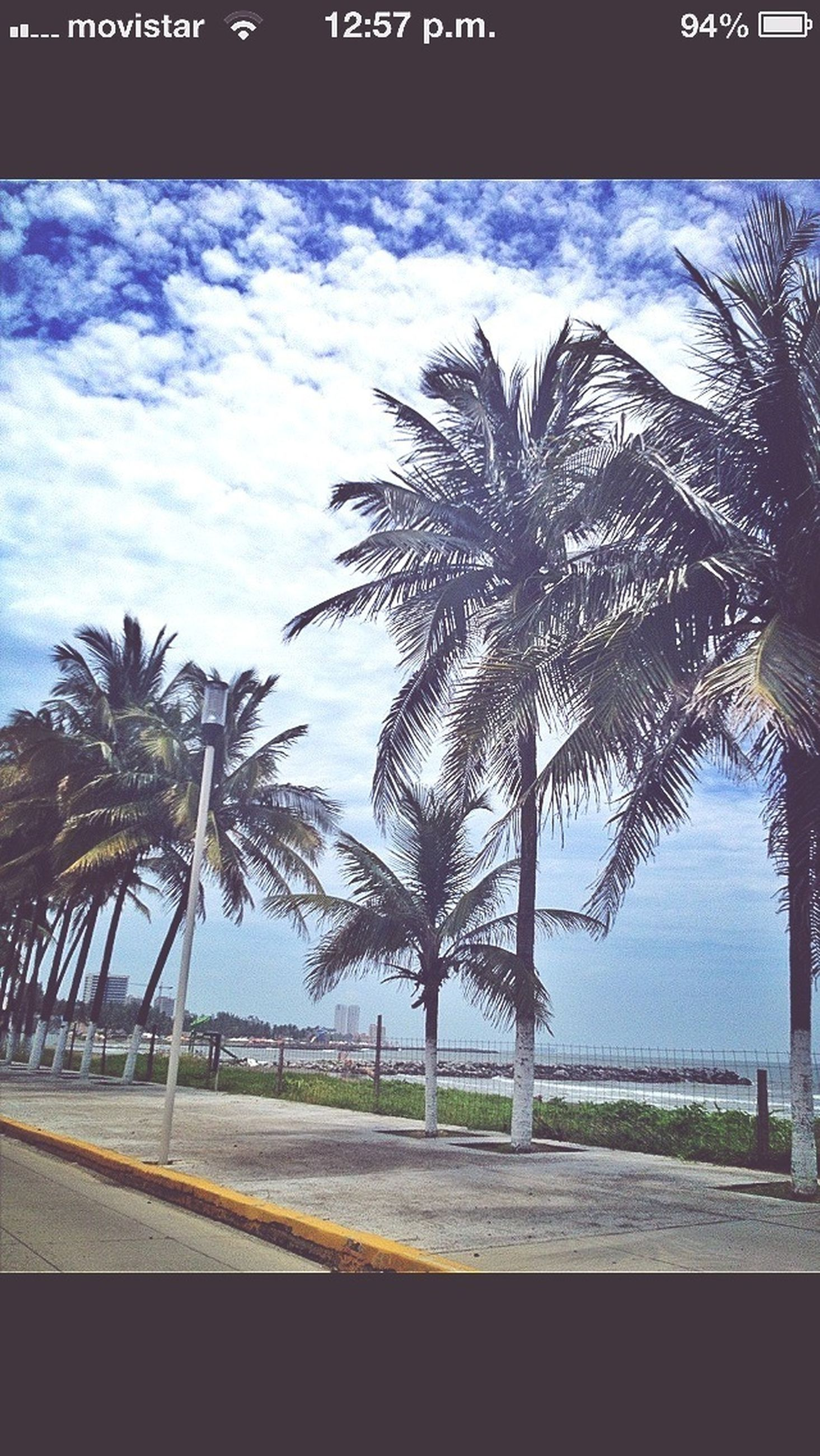 palm tree, tree, sky, tranquility, sea, blue, nature, growth, tranquil scene, road, scenics, beauty in nature, beach, tree trunk, cloud, water, cloud - sky, day, outdoors, no people