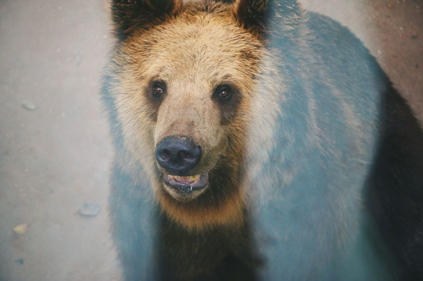 One Animal Mammal Looking At Camera Animal Themes Portrait Close-up Bear Animal Wildlife No People Animals In The Wild Nature Day Outdoors