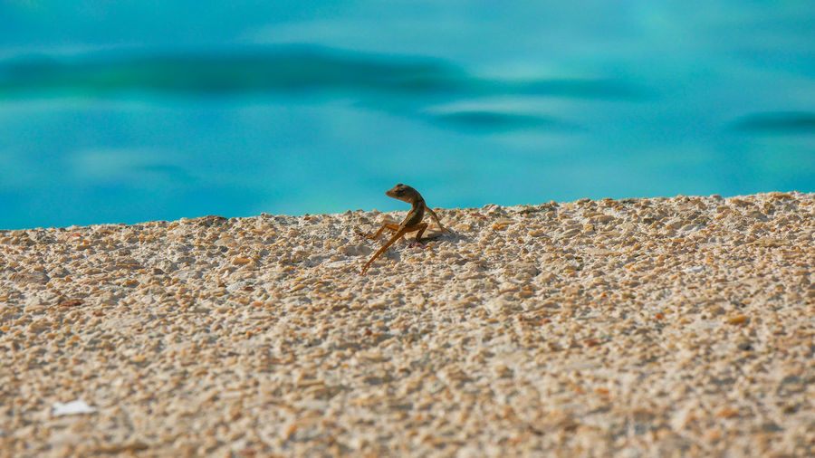 Side view of a lizard on water