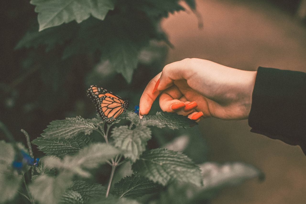 Cropped image of woman touching plant