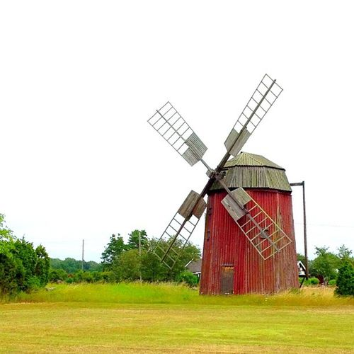 Gris med propeller  öland Sweden Windmill .