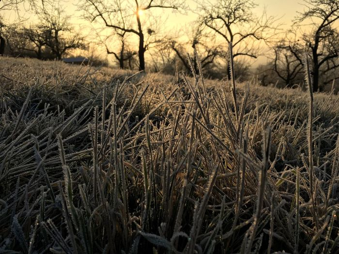 Morning Light Nature Tranquility No People Field Grass Outdoors Tree Tranquil Scene Beauty In Nature Landscape Scenics Bare Tree Sky Day Shotoniphone7 Iphonephotography