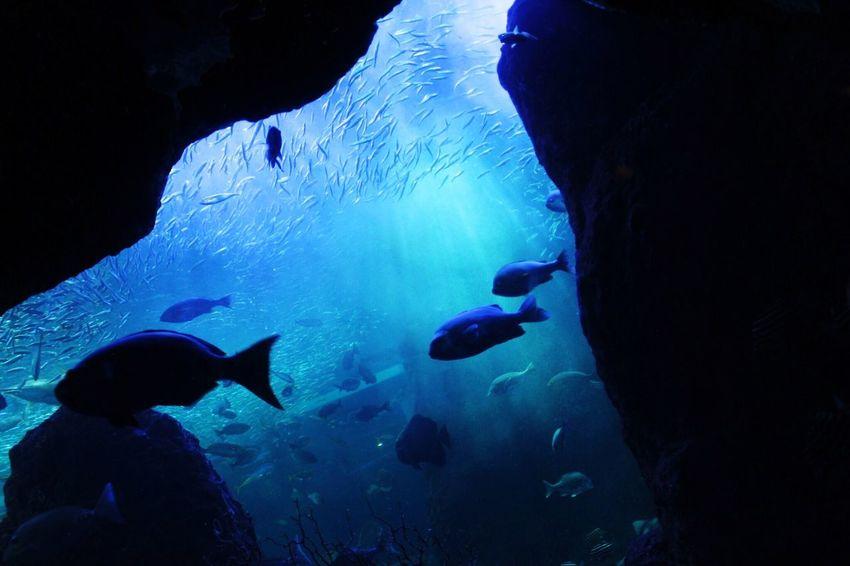 Water Aquarium Aquarium Life 水族館 Enoshima Canonphotography Canon Vacations Sea Life CanonEOSkissX7i